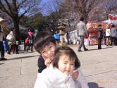 靖国神社は満開です!