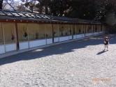 靖国神社で池坊緑葉式・家元と一門の献花が展示中です!